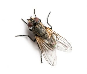 Fly Control for Worcester, Massachusetts