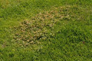 Crabgrass Control in Worcester, Massachusetts