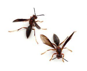Wasp Extermination in Worcester, Massachusetts