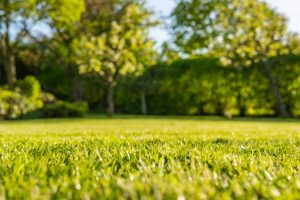 Lawn Care Near Me in Leominster, Massachusetts