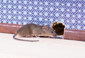 Mouse Control in Worcester, Massachusetts